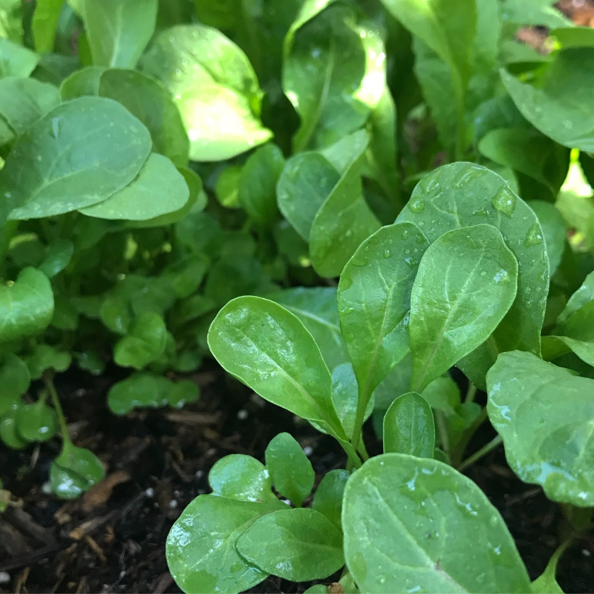 Arugula is packed with cancer-fighting carotenoids as well as potassium, manganese, iron, and calcium.