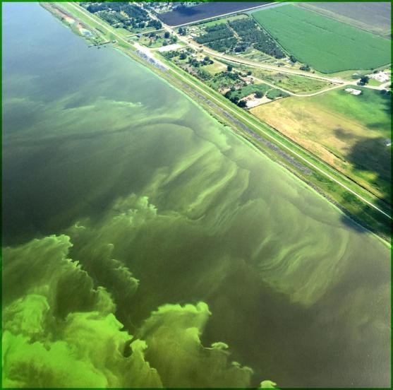 Lake_Okeechobee_algal-bloom.jpg
