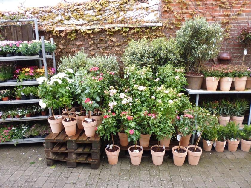 plant-flower-backyard-botany-garden-houseplant-112361-pxhere.com (1)