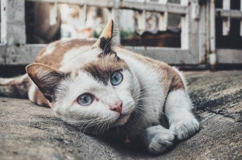 animal-pet-kitten-cat-mammal-whiskers-123530-pxhere.com.jpg
