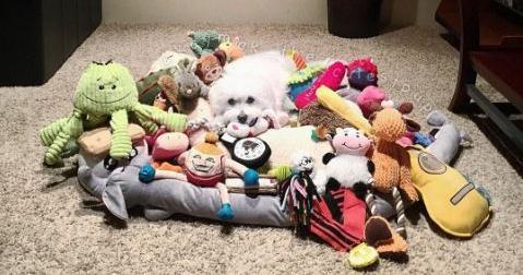 spoiled-dogs-12.jpg