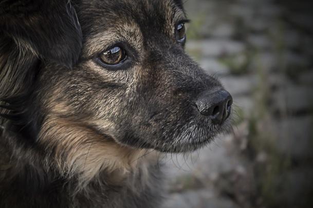 sweet-puppy-dog-cute-canine-love-655301-pxhere.com.jpg
