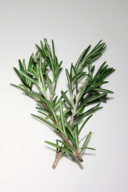 tree-grass-branch-plant-leaf-flower-898506-pxhere.com.jpg