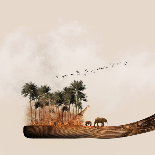 africa-1424005_1920