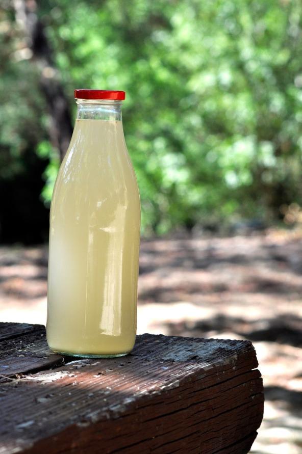 bottle-4355561_1920.jpg