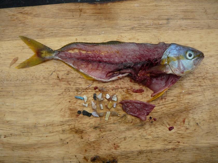 Microplastics Found in Fish