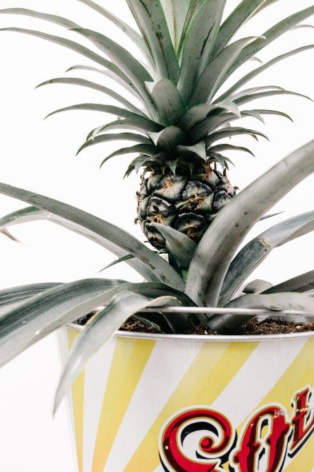 fruit-1851046