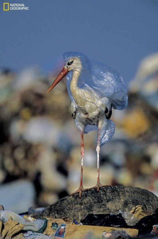 birdplastic